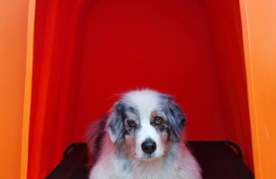 Baloo's orange YOLO Large Dog Kennel