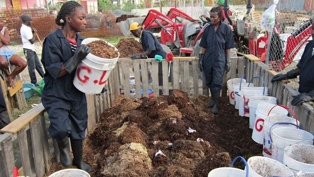 Composting human manure