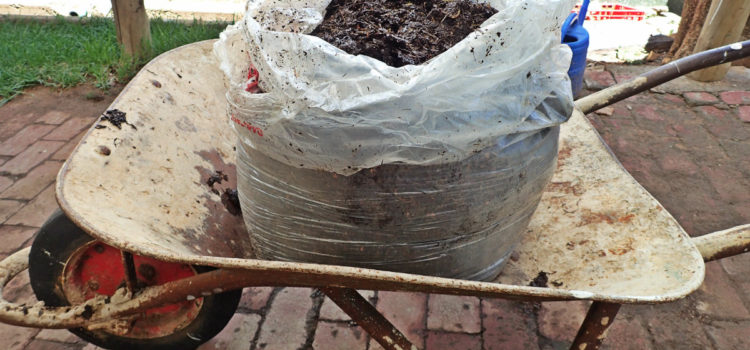 22kg of compost from a large shell