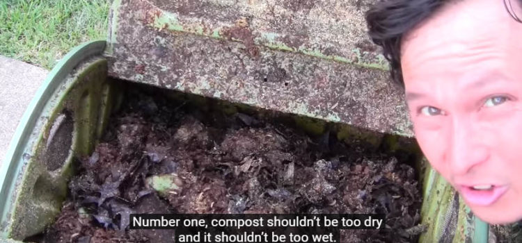 The #1 reason why your compost is not composting