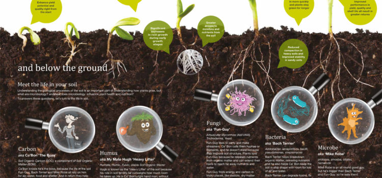 Meet the life in your soil