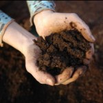 Composting in a no-dig garden