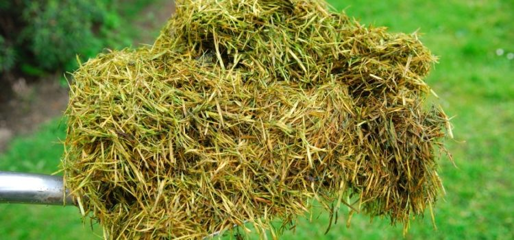 7 Things to do with grass cuttings