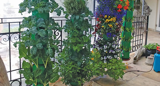 Limited space? Garden vertically (Farmer's Weekly)